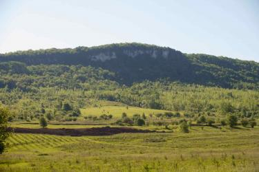 The open stone face of the Niagara Escarpment above a forested area.