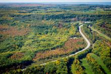 aerial photo of a Grey County road surrounded by a colourful forest in the fall.