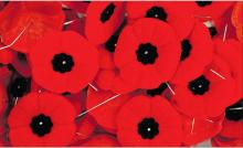 Remembrance day poppiies