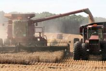 A tractor and combine harvest wheat