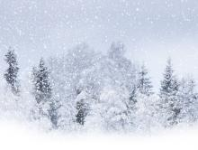 a forest is covered in snow with more falling from the sky