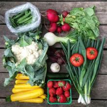 Fresh locally grown vegetables are displayed on a table top.